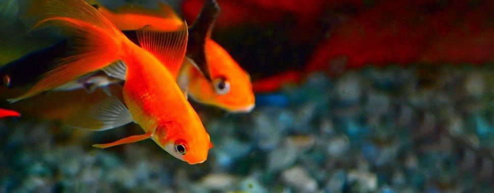 Kategorie Aquaristik