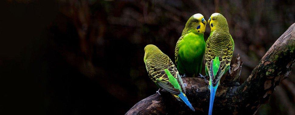 Kategorie Vogel