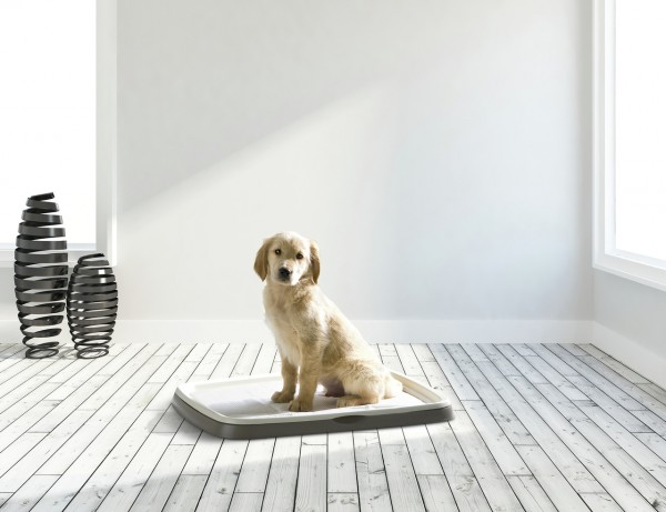 SAVIC Puppy Trainer Kit L