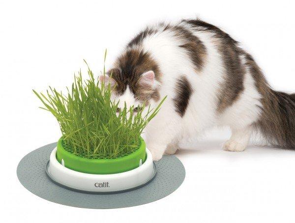 catit Senses 2.0 Grass Planter Grastopf Katzenspielzeug