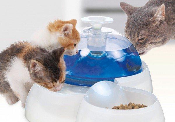 catit Fresh & Clear Trinkbrunnen 3 Liter mit Futternapf