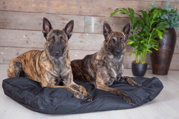 Rebel Petz Basic XL Hundekissen schwarz