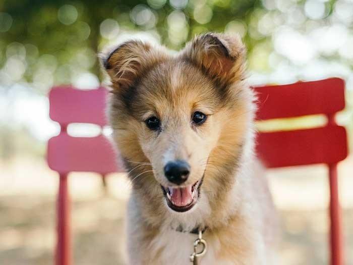 Junger Hund (ab dem 4. Lebensmonat, ab dem Zahnwechsel)