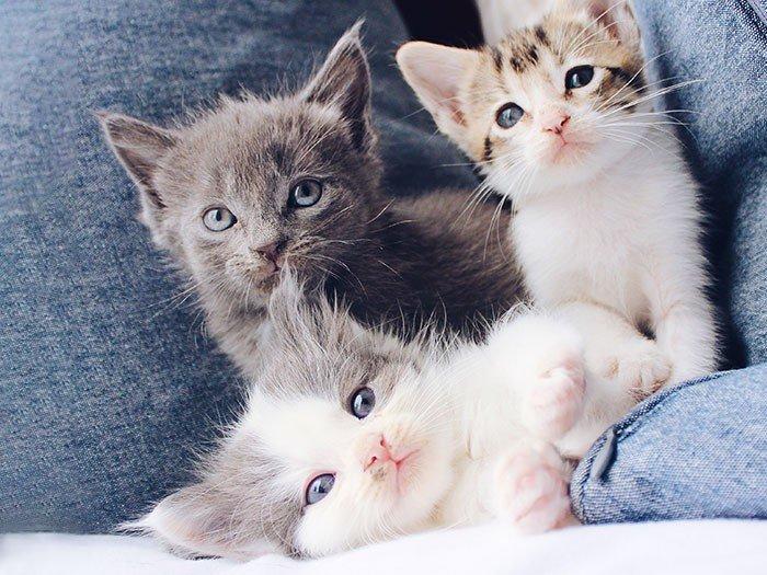 Kitten (ca. 3 - 4 Lebenswochen)