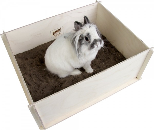 Bunny Buddelkiste