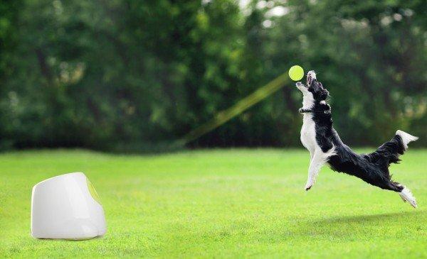 all for paws (afp) Hyper Fetch Maxi Ballwurfmaschine für Hunde